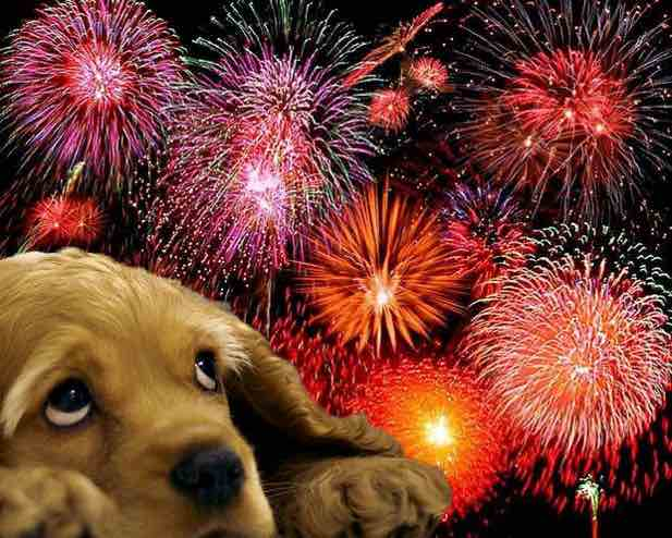 Anxiety Around Fireworks?